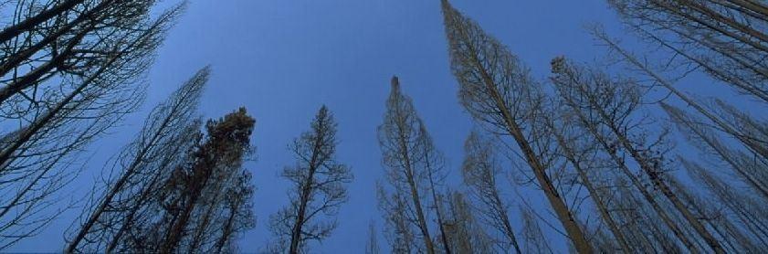 Trees-sky1
